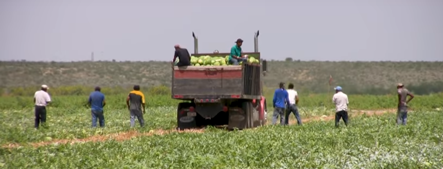 CBS News: These U.S. Industries Can't Work Without Illegal Immigrants